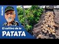 El cultivo de la Patata, Potato cultivation, La culture de la pomme de terre
