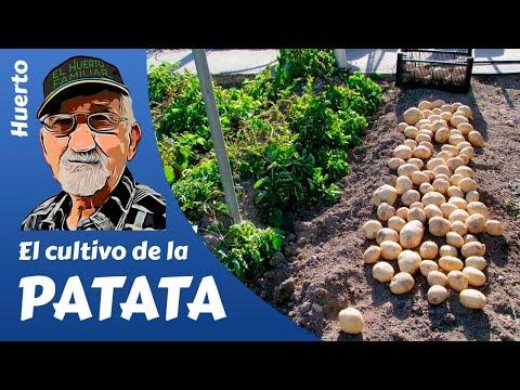 El cultivo de la Patata, Potato cultivation, La culture de la pomme de terre