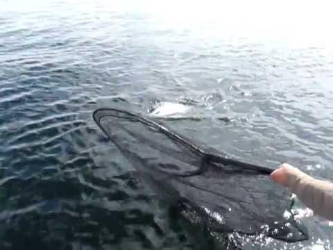 рыбак элек