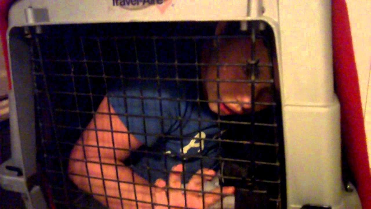 girl in a dog cage - YouTube