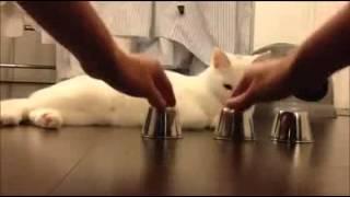 فيديو: 41 مليون مشاهدة لذكاء قطة