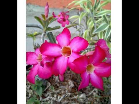 #purple #flowers #beautiful #nature #naturelovers #bestnatureshot #photooftheday #flower #garden #