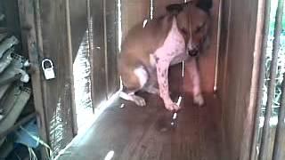 anjing rusuh by dimon