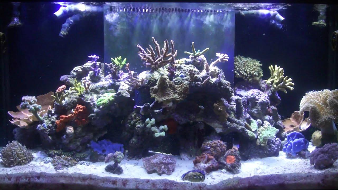 Marineland Reef Capable LED Lighting Review - YouTube