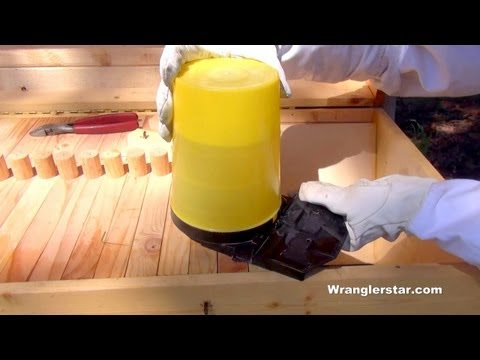 How to Add Feeders to Your Beehive