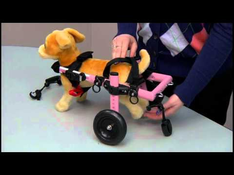 How to Adjust The Walkin  Wheels Mini Dog Wheelchair