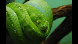 10 Deadliest Snakes on Earth