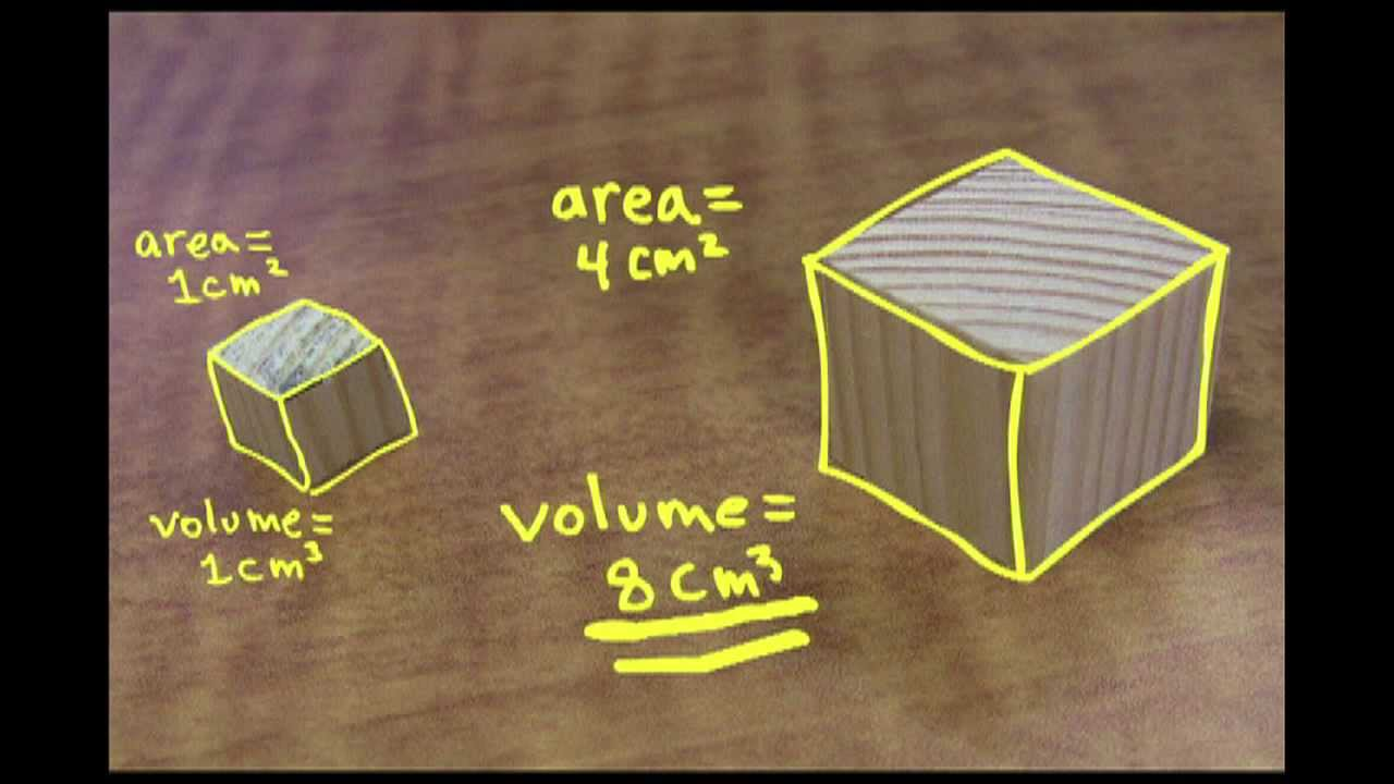 Small Is Mighty The Square Cube Law Youtube