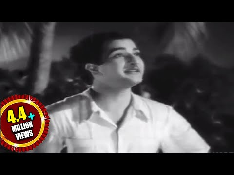 Missamma Movie || Raavoyi Chandamaama Video Song || Ntr, Anr, Svr, Savitri, Jamuna video