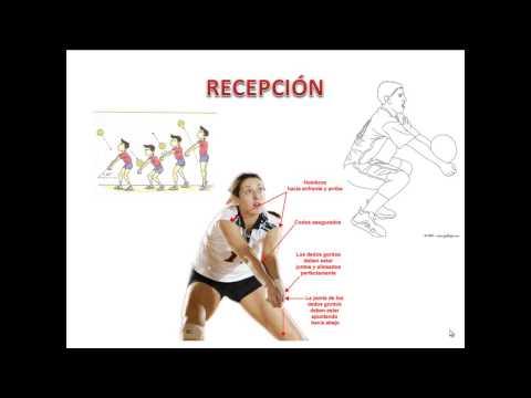Técnicas Básicas del Voleibol