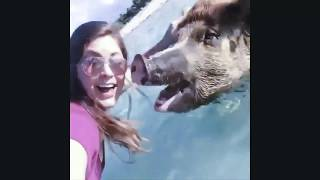 Funny Animals Behavior