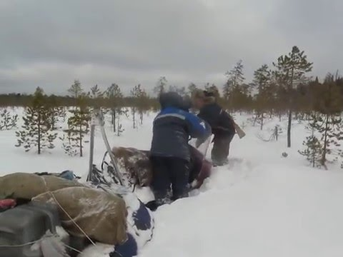 охота на рыбалку сургут снегоходы тайга
