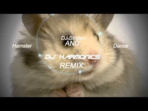 The Hampster Dance - (dj Harmonics & Dj Striden Remix) video
