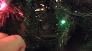 Tink the Cat climbs fake Christmas Tree! CUTE