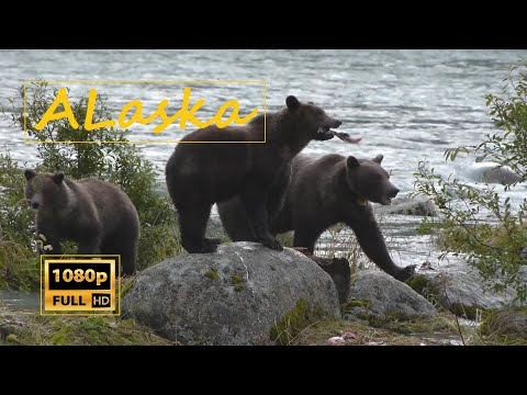 Kenai Alaska Travel & Fishing Movie