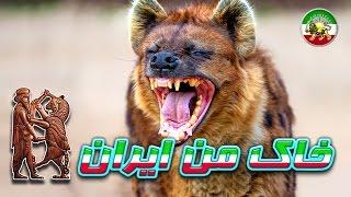 مستند فارسی - نبرد کفتار ها