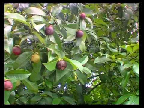 Рай тропических фруктов