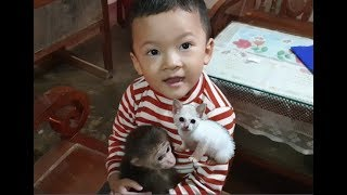 Baby Monkey | Doo And Cat Miu Feel Happy With Family