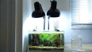 Ep.7 Spinach Betta Tank (Making Brine Shrimp for Kartoffel)  No filter, No CO2, NO ferts Nano Tank
