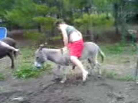 3AnimalSexTube  Donkey sex Videos by Category Donkey sex