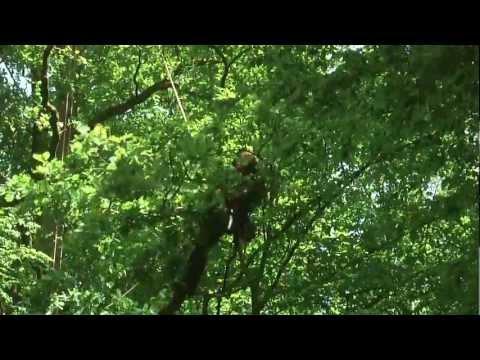 Tree climbing w Kortowie