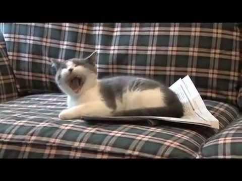 I'm a Stupid Cat!