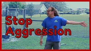 stop my dog from being aggressive   solid k9 training RI