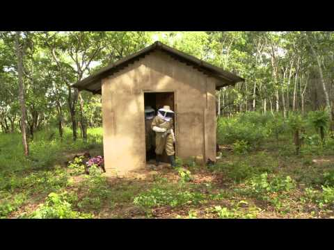 Honey Harvest in Liwale: Forest Profits from Improved Beekeeping