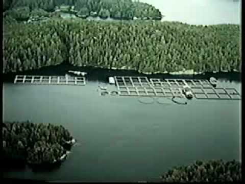 Salmon Aquaculture - A Growing Industry