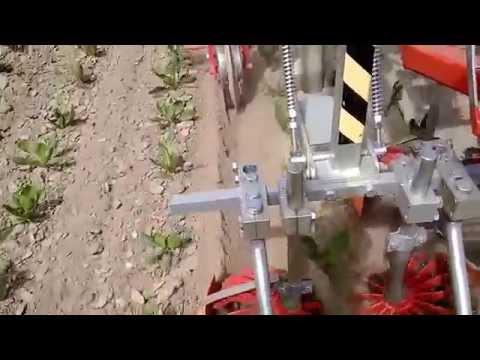 ROTOSARK OLIVER SARCHIATRICE BINEUSE WEEDING MACHINE DESYERBADORA HACKMASCHINE ORGANIC radicchio BIO