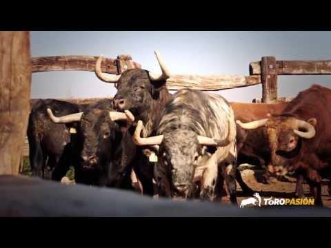 Toropasión - Toros para la Feria de La Magdalena de Castellón 2014