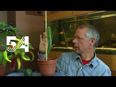 Die Sämlinge und wie geht es weiter mit den Exoten und anderen Pflanzen Teil 54