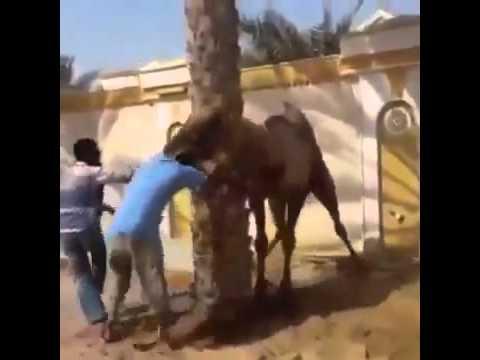 Secret Sex Scandal video