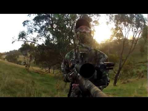 Fox. Cat and Rabbit Hunting - May 2012