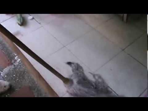 Diese erstaunliche entdeckung for Como quitar manchas de pintura del piso