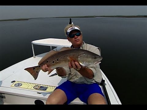 REDFISH on topwater in Jacksonville