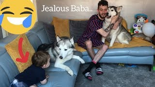 Jealous Baby Only Wants Cuddles When The Huskies Do!!