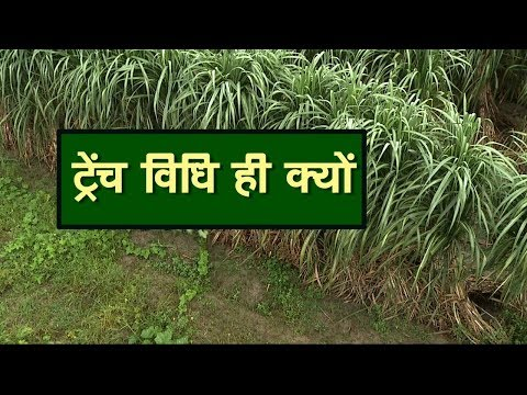 Trench Method In SugarCane Farming Green TV