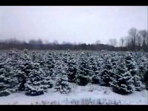 Sloan's Christmas Tree Village 2012