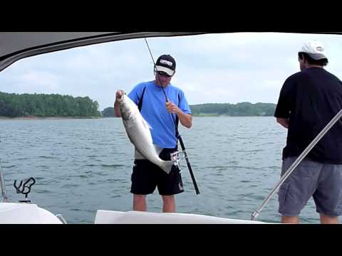 Striped Bass Fishing on Lake Lanier Georgia