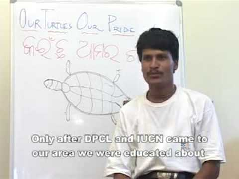 Importance of Olive ridley Turtles