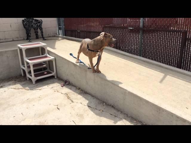 Meet Buddha -  Adoptable Dog in St. Louis | Gateway Pet Guardians