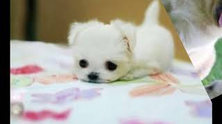 5 Most Cutest Puppies
