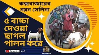 ৫ বাচ্চা দেওয়া ছাগলের জাত উন্নয়ন করেছে সাগরকন্যা নয়ন সেলিনা, Poultry, Pigeon, Dairy, Goat farm