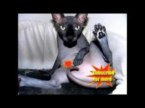 Wet Pussy Cat video
