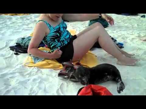 Encuentro con un bebé de león marino en las islas Galápagos - FaceLOCO.com