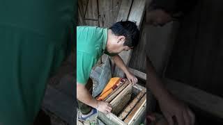 quay mật ong vụ thu đông /mù cang chải