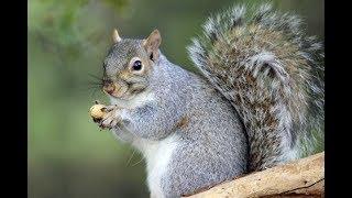 squirrel feeding with warmth