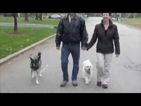 Jeff Loy Dog Training - Jjloy