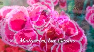 Madreselva -  Luz Cassino